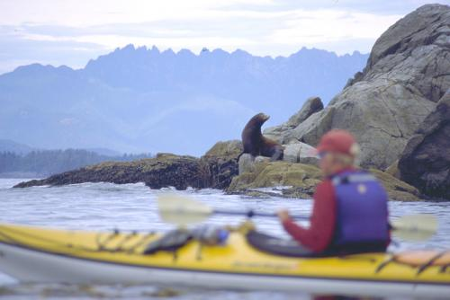 BATSTAR-kayaker-and-sea-lion2
